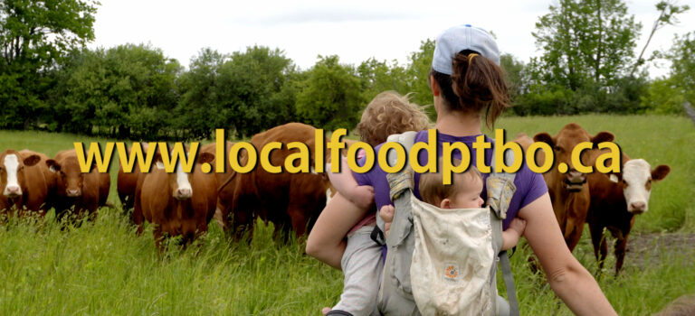 From the Farm to You:      Beef in our Community